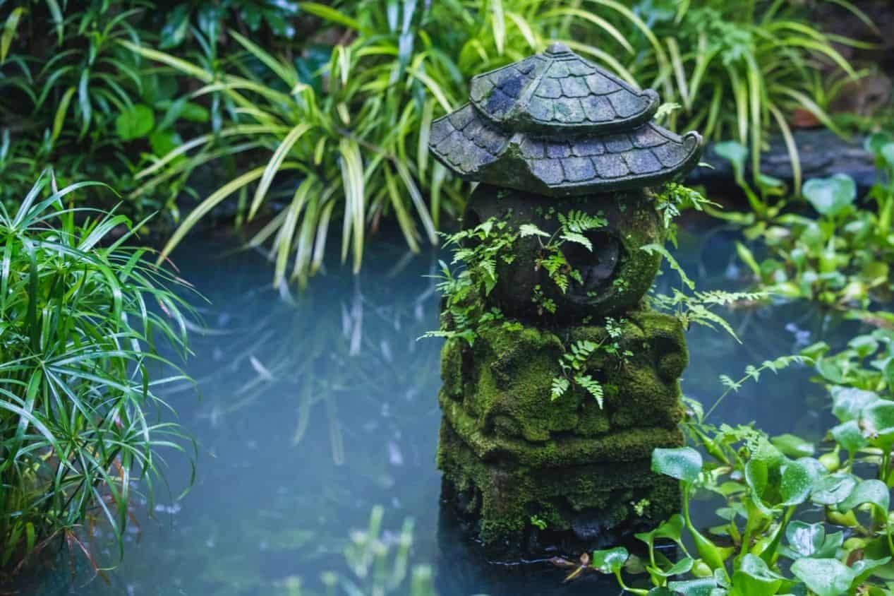 garden-pond-maintenance-3-weeds
