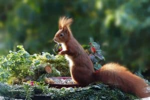 care-for-wildlife-in-winter-5-attract-garden-visitors