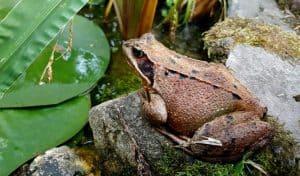 making-a-wildlife-pond-3-winter