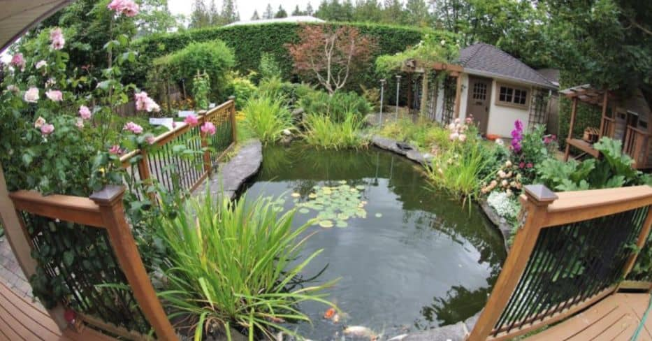 making-a-wildlife-pond