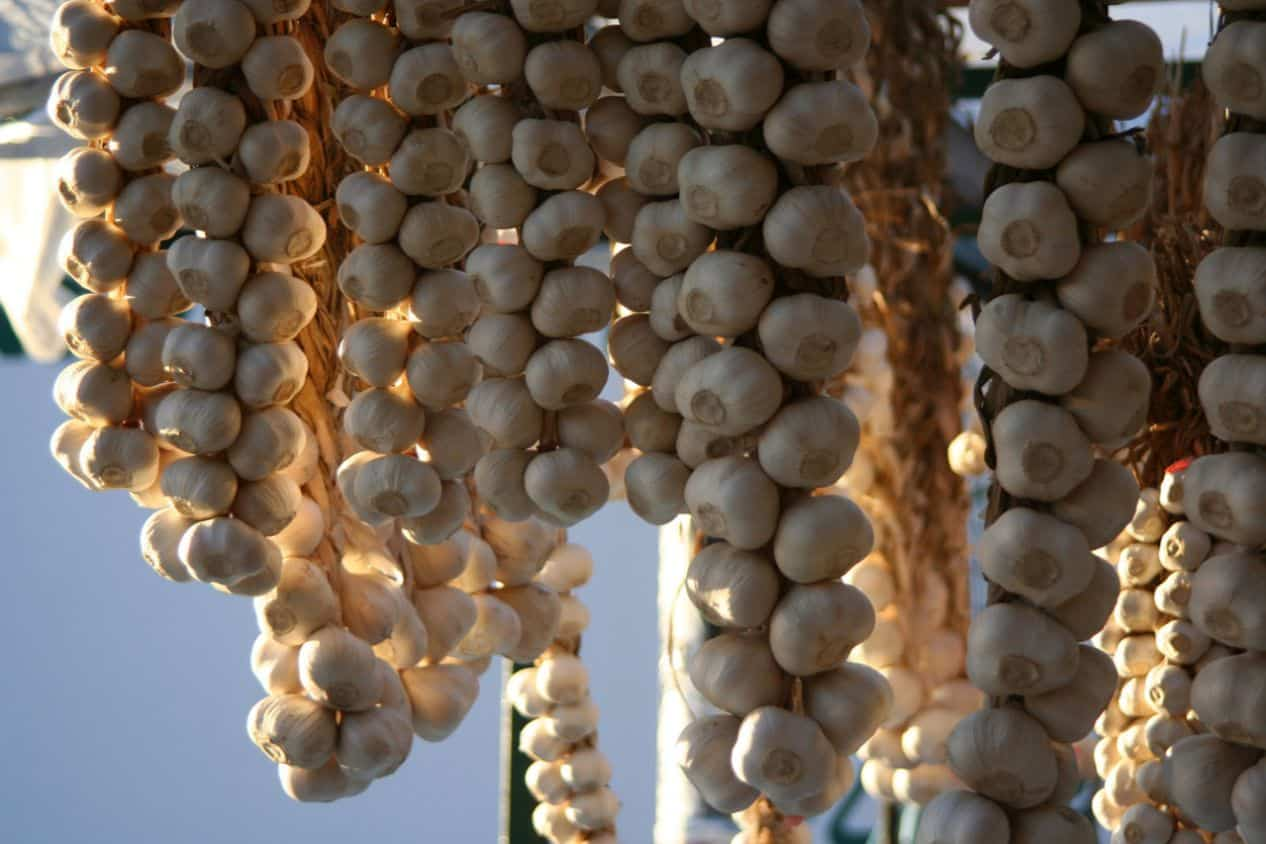 medicinal-plants-uk-10-garlic