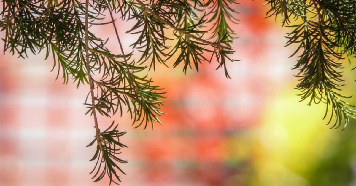 medicinal-plants-uk