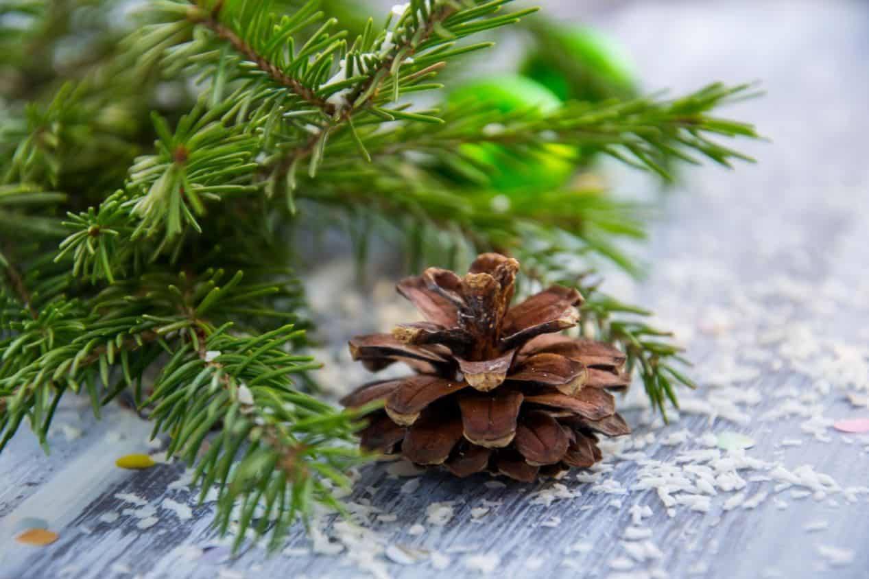 tips-buying-a-Christmas-tree-10-check-your-trees-freshness