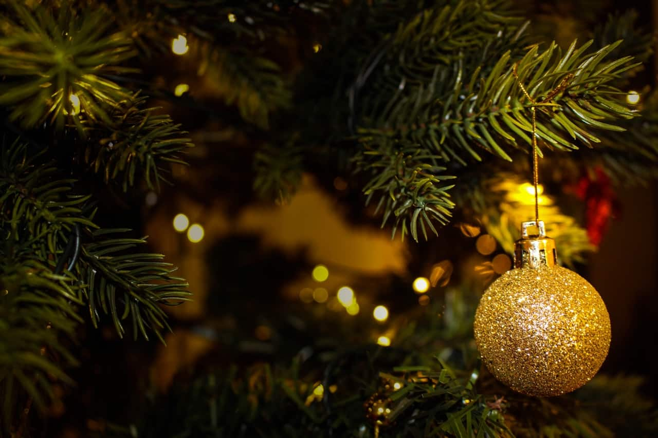tips-buying-a-Christmas-tree-6-decide-on-the-kind-of-tree-you-prefer