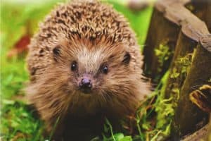 ultimate-guide-to-wildlife-friendly-garden-4-helping-your-local-wildlife