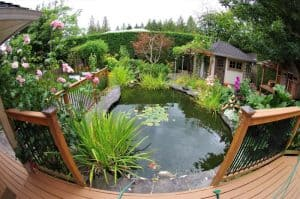 ultimate-guide-to-wildlife-friendly-garden-5-things-to-consider-when-creating-a-wildlife-pond