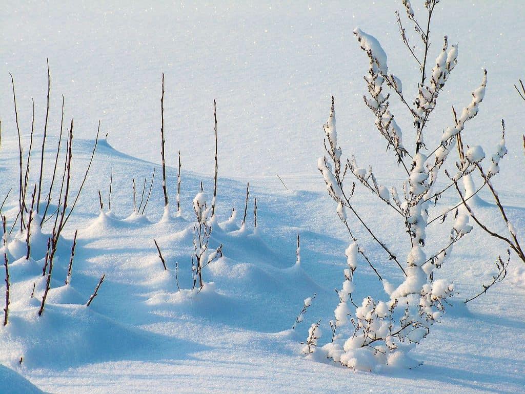 winter-gardening-jargon-buster-1-dormant