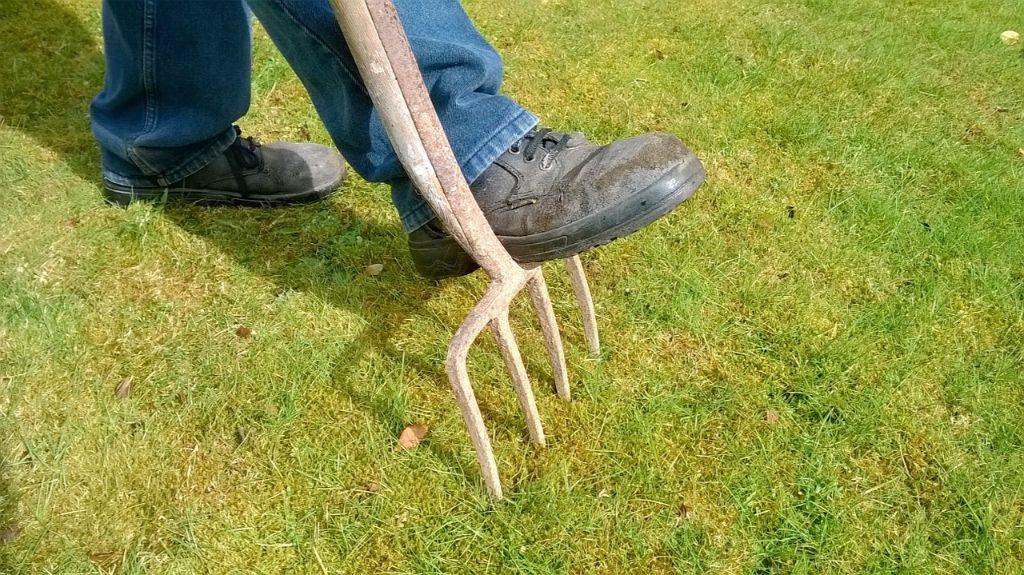 winter-gardening-jargon-buster-2-spiking
