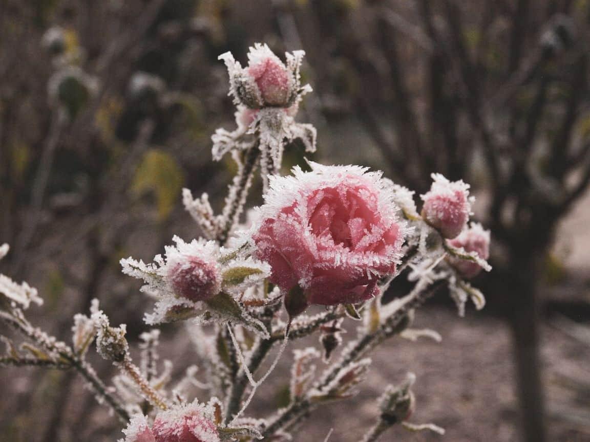 winter-gardening-jargon-buster-3-hardy-plants