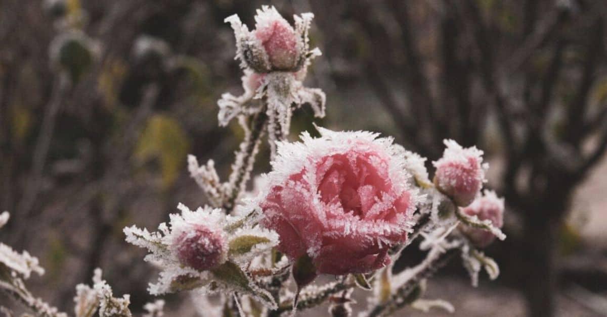 winter-gardening-jargon-buster