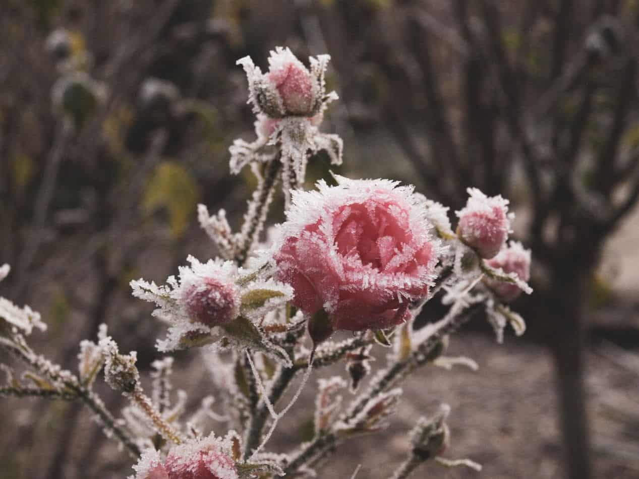 annoying-winter-disadvantages-2-frozen-garden