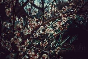 garden-trends-for-2020-5-native-plants