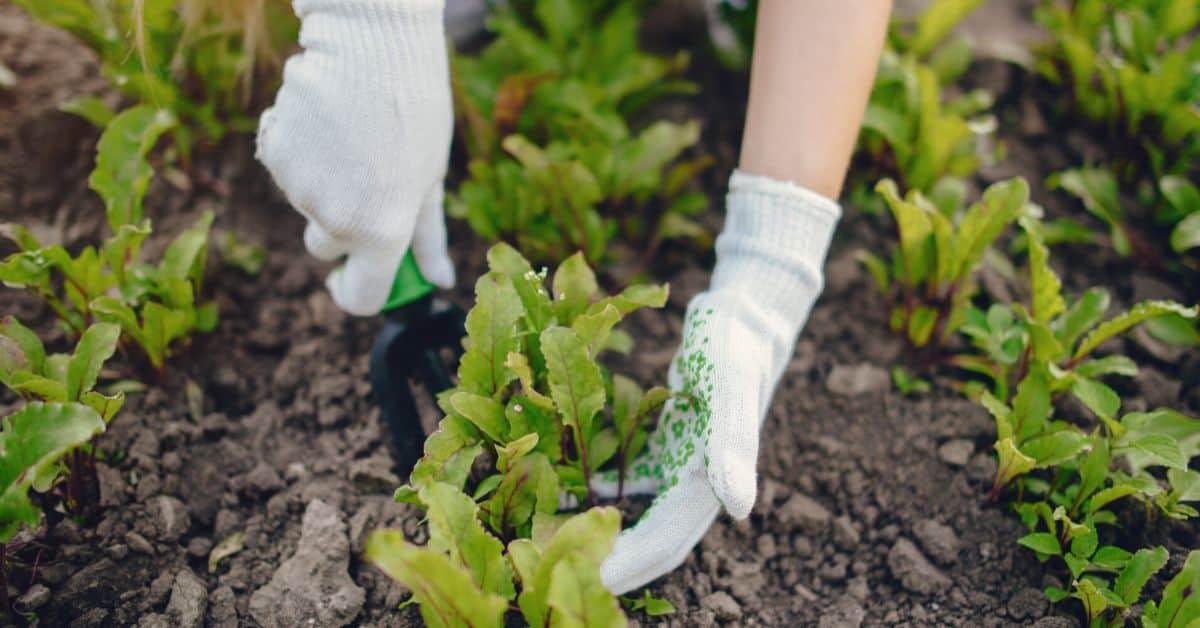 garden-trends-for-2020