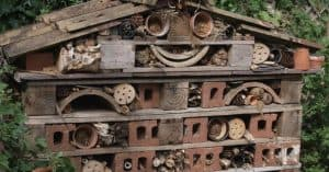 steps-to-consider-in-building-a-bug-hotel (1)
