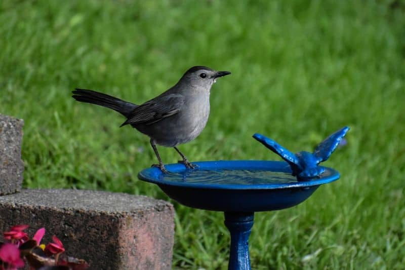 ways-to-keep-the-birds-safe-from-cats-3-positioning-the-feeder-and-birdbath