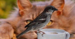 ways-to-keep-the-birds-safe-from-cats