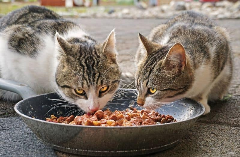 ways-to-keep-the-birds-safe-from-cats-4-dont-feed-stray-cats