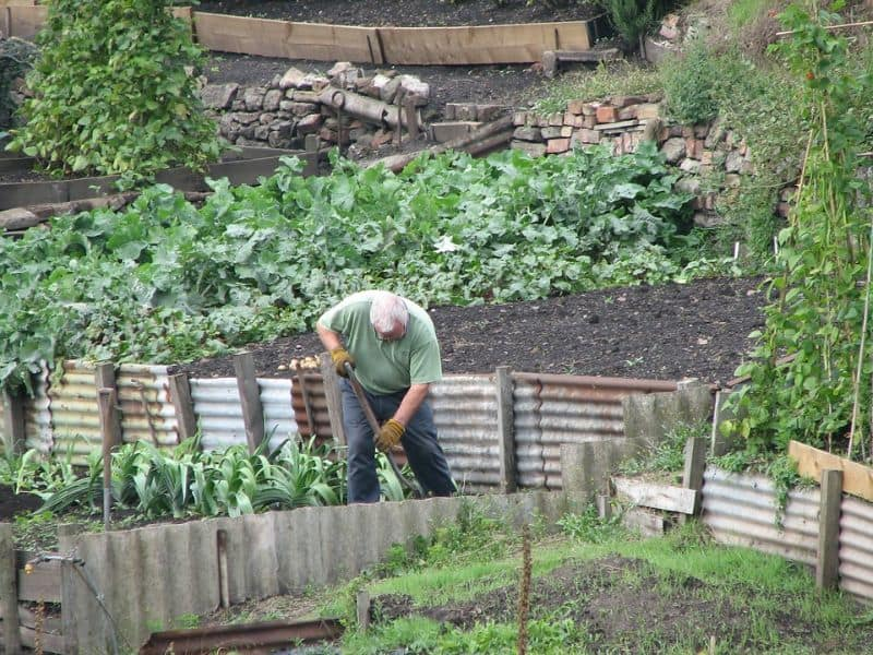 beginners-guide-to-starting-an-allotment-1-when-to-start-your-allotment-pixabay