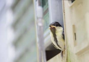 different-ways-to-use-your-shed-3-wildlife-spotting-shed-pixabay