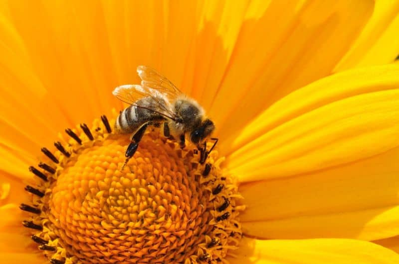 five-animals-you-can-keep-in-your-garden-3-bees-pixabay