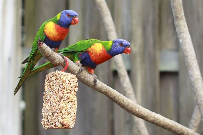 five-animals-you-can-keep-in-your-garden-5-avoary-birds-pixabay