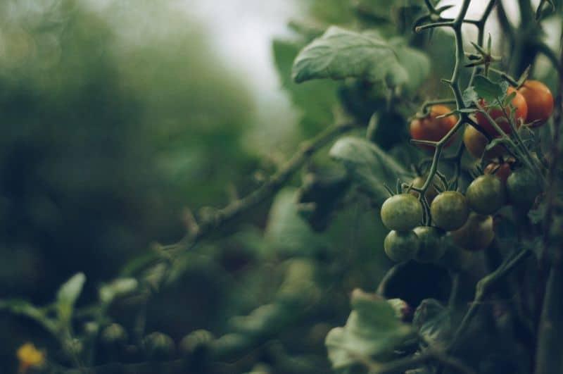 how-to-start-an-organic-garden-1-start-small-pixabay
