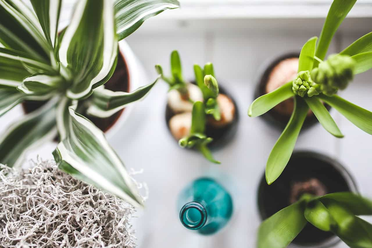 indoor-plant-care-mistakes-1-wrong-plant-choice-pixabay