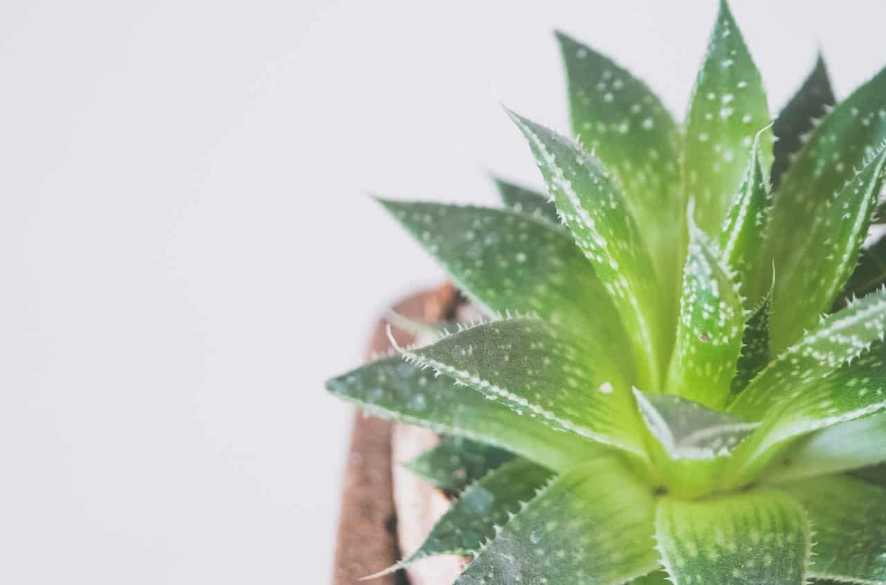 indoor-plant-care-mistakes-5-near-radiator-pixabay