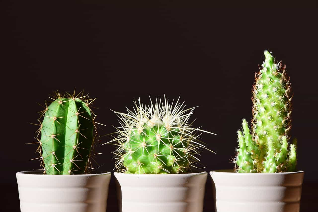 indoor-plant-care-mistakes-6-direct-sunlight-pexels