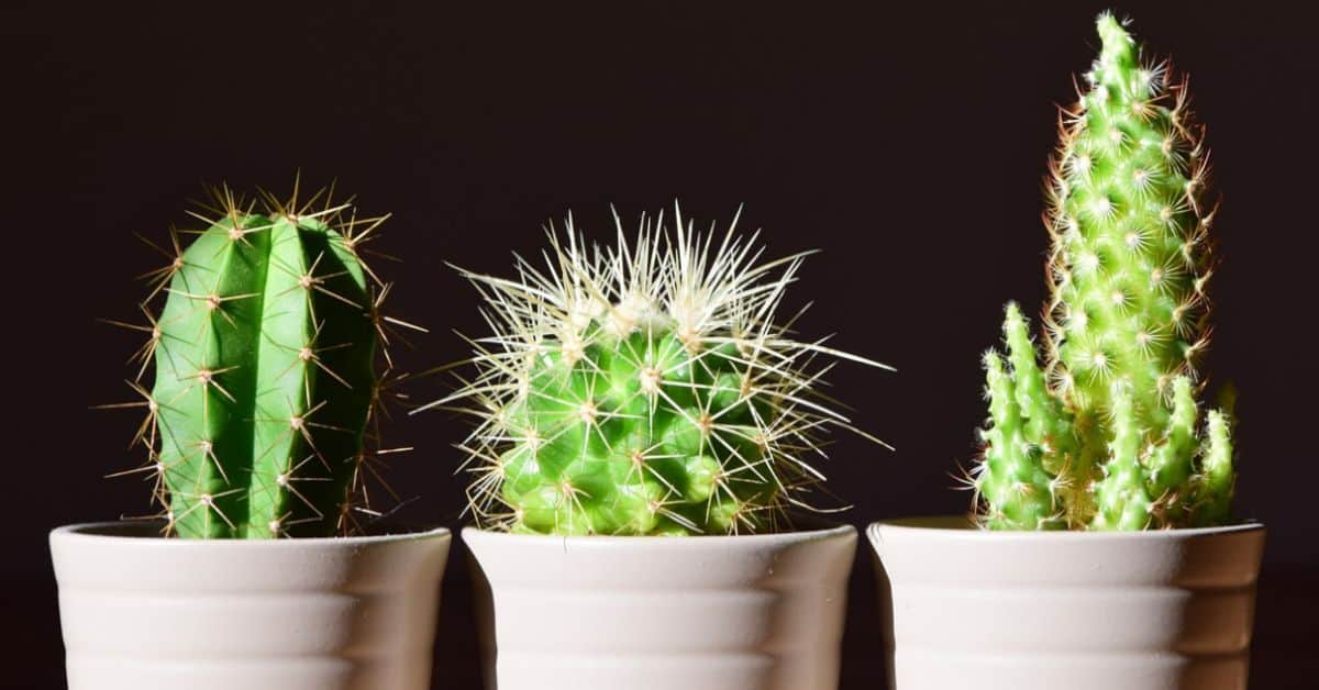 indoor-plant-care-mistakes-featured-image-pexels