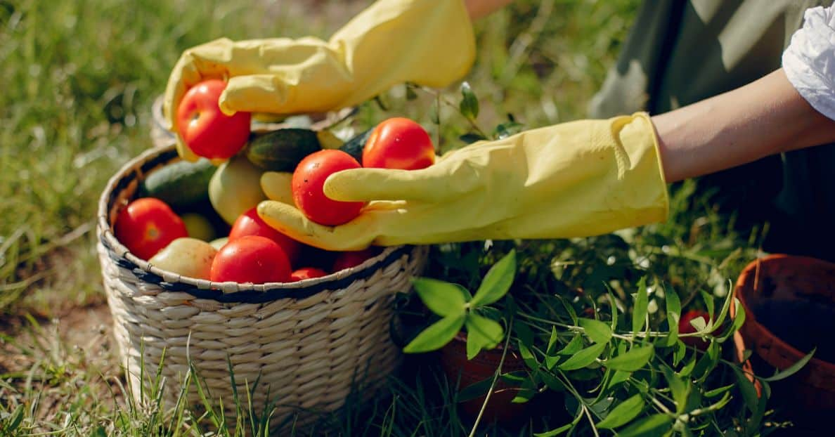 new-years-resolutions-for-gardeners-4-grow-your-own-freepik