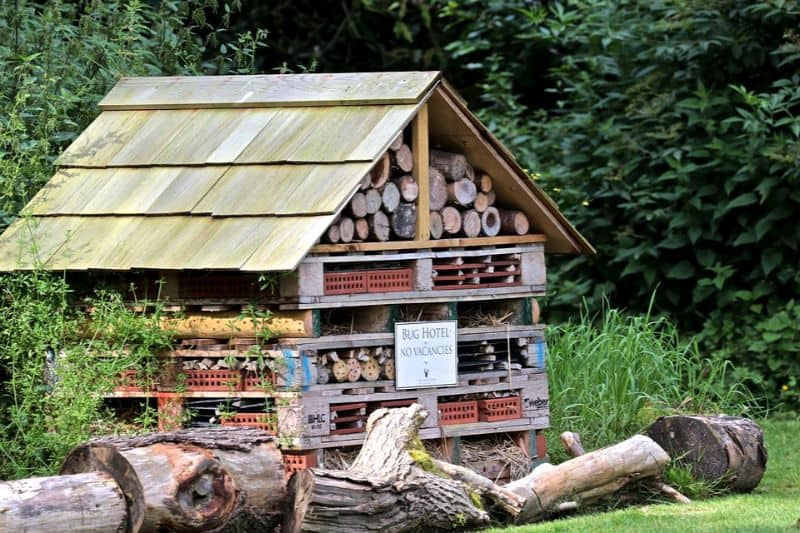 steps-to-consider-in-building-a-bug-hotel-1-the-ideal-hotel-location