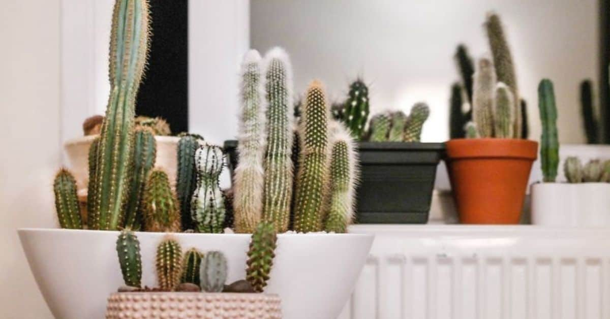 top-houseplant-trends-for-2020