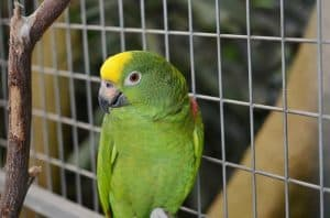 important-steps-when-building-an-outdoor-bird-aviary-1-determine-the-size-pixabay-1