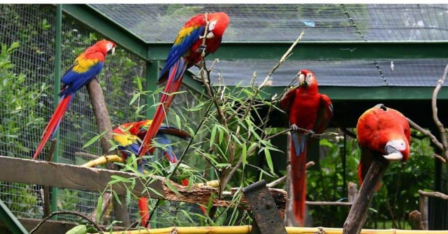 important-steps-when-building-an-outdoor-bird-aviary (1)
