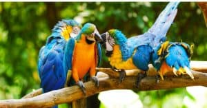 important-steps-when-building-an-outdoor-bird-aviary