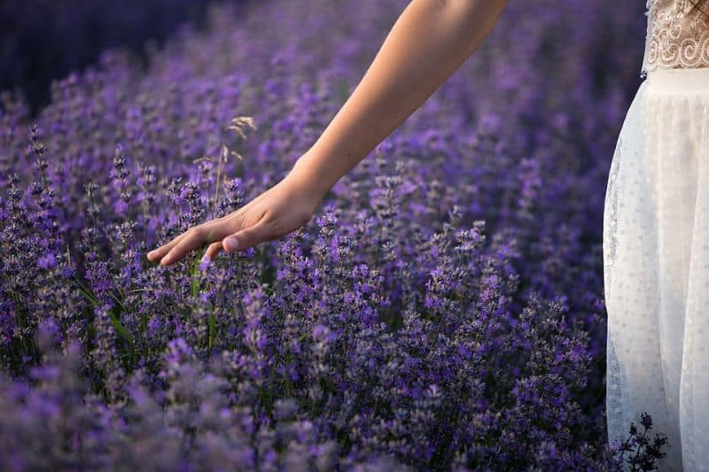 ways-to-build-sensory-garden-the-sense-of-touch-pixabay