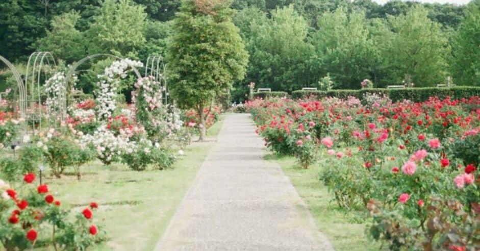 ways-to-build-sensory-garden