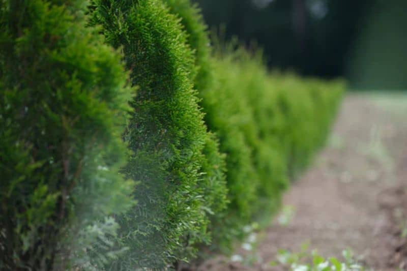 ways-to-reduce-noise-pollution-in-the-garden-1-planting-shrubs-1