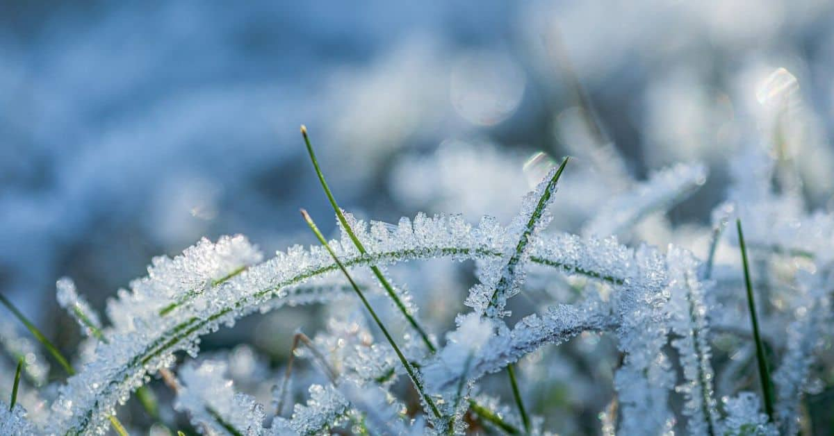 winter-lawn-care-tips-featured-image-pixabay