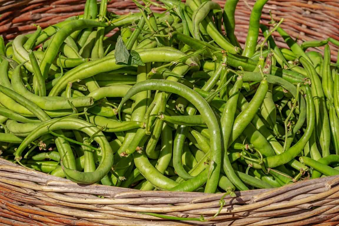 fast-growing-vegetables-5-beans-pixabay