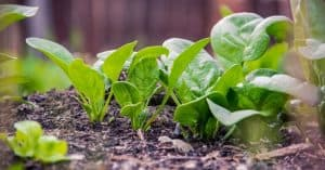 fast-growing-vegetables-featured-image-pixabay