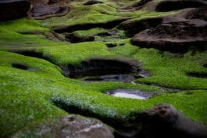 how-to-grow-your-own-moss-garden-1-two-main-types-of-moss-unsplash