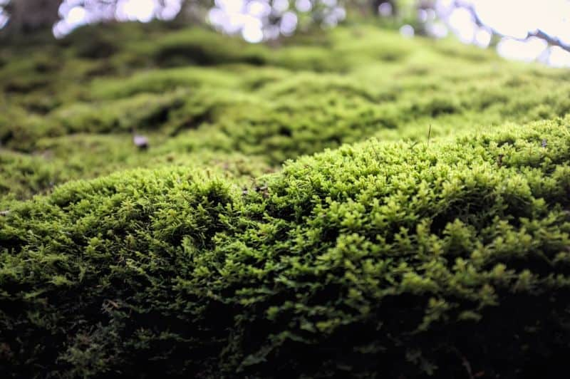 The beauty of growing mosses in your garden.