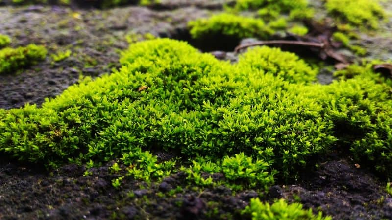 how-to-grow-your-own-moss-garden-2-benefits-of-moss-to-your-garden-unsplash