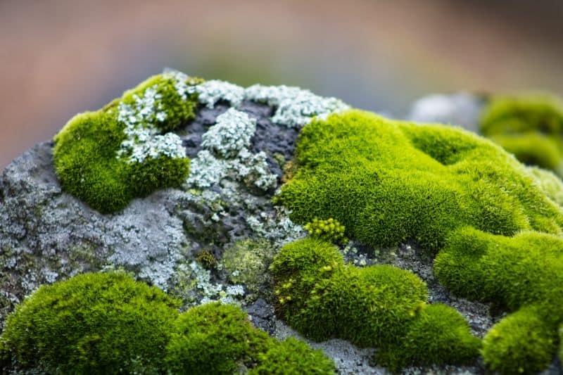 How To Grow Your Own Moss Garden In 5, Growing A Moss Garden
