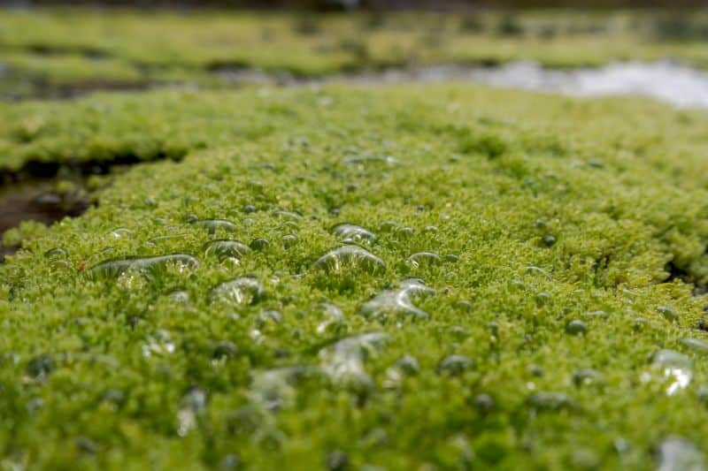 Growing your own moss garden comes with tons of benefits!