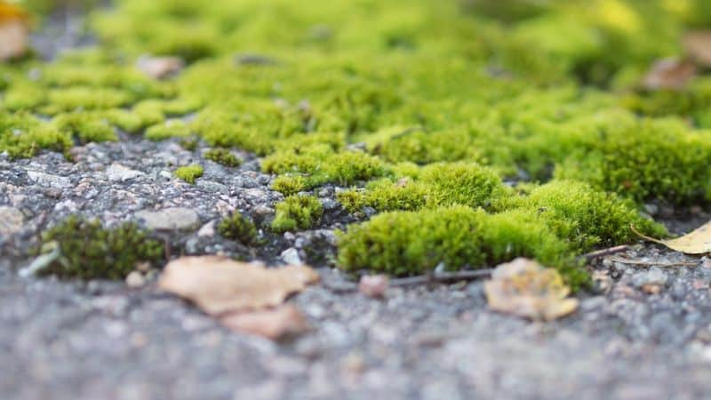 Growing your own moss garden is now possible with these 5 easy steps!
