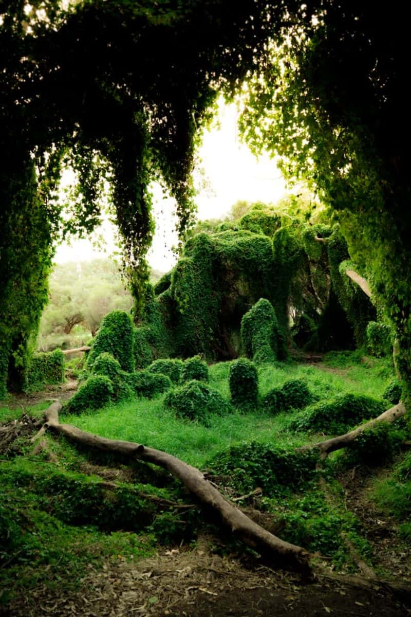 This moss garden is giving off a secret garden vibe, which many homeowners love!