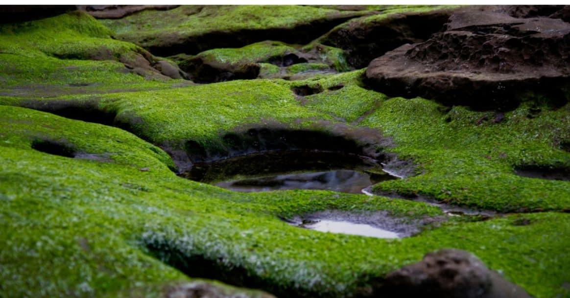 To Grow Your Own Moss Garden, Growing A Moss Garden